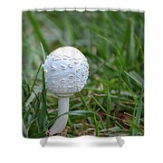 Patterns Shower Curtain