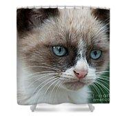 Pauls Little Cat Shower Curtain