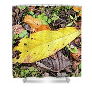 Paw Paw Leaf Fall Colors Shower Curtain