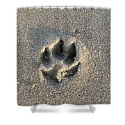 Pawprint In The Sand Shower Curtain