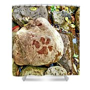 Paws On The Rocks Shower Curtain