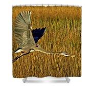 Pb296601 Great Blue Heron Shower Curtain