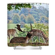 Peace And Quiet Shower Curtain