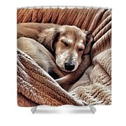 Peace At Last #saluki Shower Curtain
