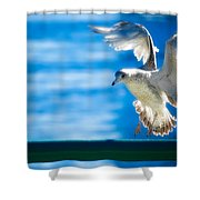 Peace Gull Shower Curtain