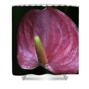 Peace-lilly-pink Shower Curtain