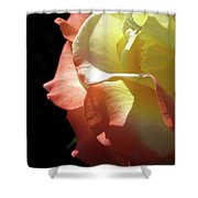 Peace Rose 2 Shower Curtain