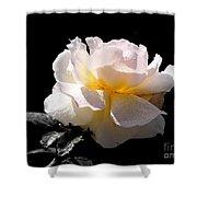 Peace Rose Inner Light Shower Curtain