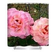 Peace Roses Shower Curtain