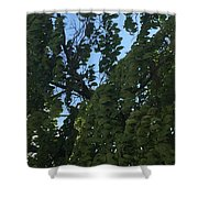 Peaceful And Relaxed  Shower Curtain