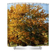 Peaceful Country Road Shower Curtain