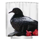 Peaceful Garden - 2 Shower Curtain