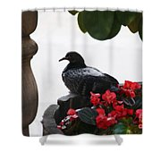 Peaceful Garden Shower Curtain
