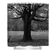 Peaceful Park Shower Curtain