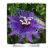 Peaceful Passion Shower Curtain