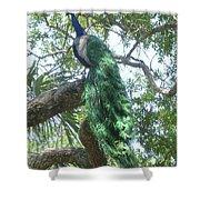 Peaceful Peacock Shower Curtain
