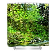 Peaceful Small Creek Under Kinsol Trestle, Vancouver Island, Bc, Canada 1. Shower Curtain