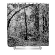 Peaceful Trees Shower Curtain