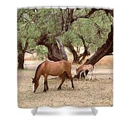 Peacefully Grazing Shower Curtain
