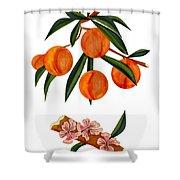 Peach And Peach Blossoms Shower Curtain