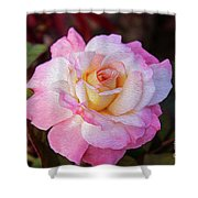 Peach And White Rose Shower Curtain