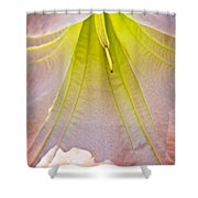 Peach Angel's Trumpet Inside At Pilgrim Place In Claremont-california Shower Curtain