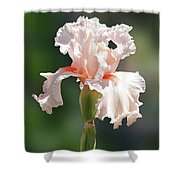 Peach Bearded Iris 2 Shower Curtain