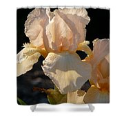 Peach Bearded Iris Shower Curtain