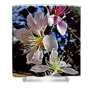 Peach Blossoms Shower Curtain