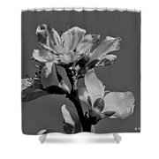 Peach Blossoms In Grayscale Shower Curtain