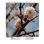 Peach Blossoms In Spring Shower Curtain