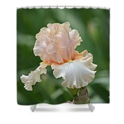 Peach Color Iris Shower Curtain