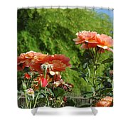 Peach Colored Beauties Shower Curtain