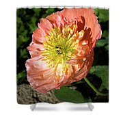 Peach Colored Poppy Shower Curtain