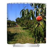 Peach Grove Shower Curtain