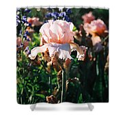 Peach Iris Shower Curtain