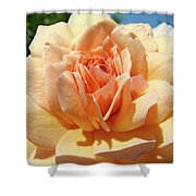 Peach Rose Art Prints Roses Flowers Giclee Prints Baslee Troutman Shower Curtain