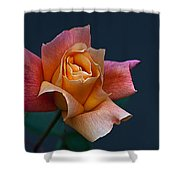 Peach Rose Bud Shower Curtain