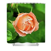 Peach Rose In The Rain Shower Curtain