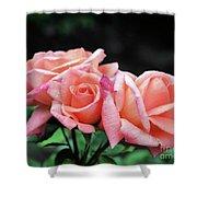 Peach Rosebud Trio Shower Curtain