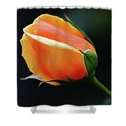 Peach Splendour Shower Curtain