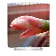Peach Succulent Shower Curtain