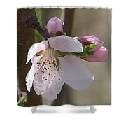 Peach Tree 3 Shower Curtain