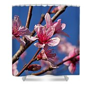 Peach Tree Blossoms Shower Curtain