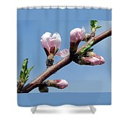 Peach Tree Shower Curtain
