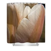 Peach Tulip Shower Curtain