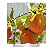 Peaches On The Tree Shower Curtain
