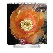 Peachy Opuntia Flower Shower Curtain