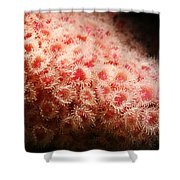 Peachy Urchins Shower Curtain