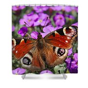 Peacock Butterfly Shower Curtain